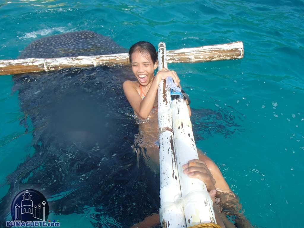 Whale Shark Bait
