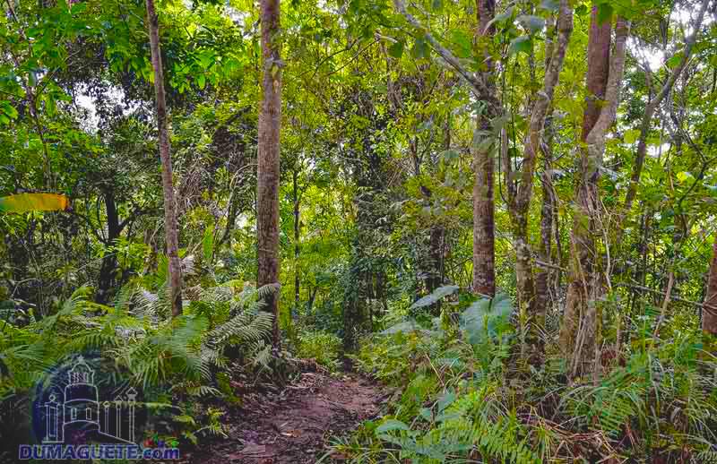 Trekking on Mount Talinis Negros Oriental