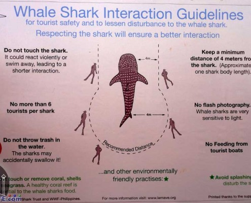 Whale-Shark - Interaction Guidelines