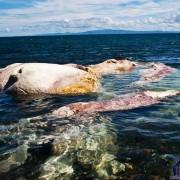 Dead Whale in Dumaguete Dauin