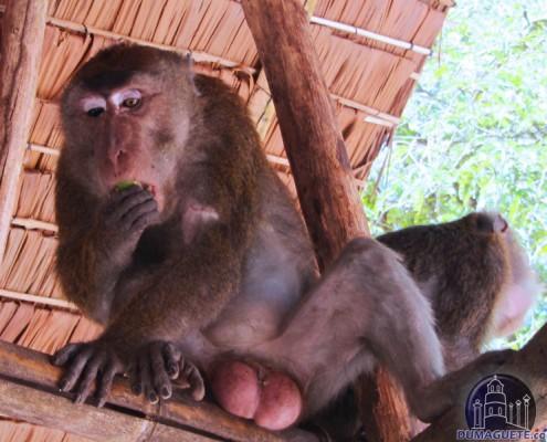 Monkey Sanctuary - Santa Catalina