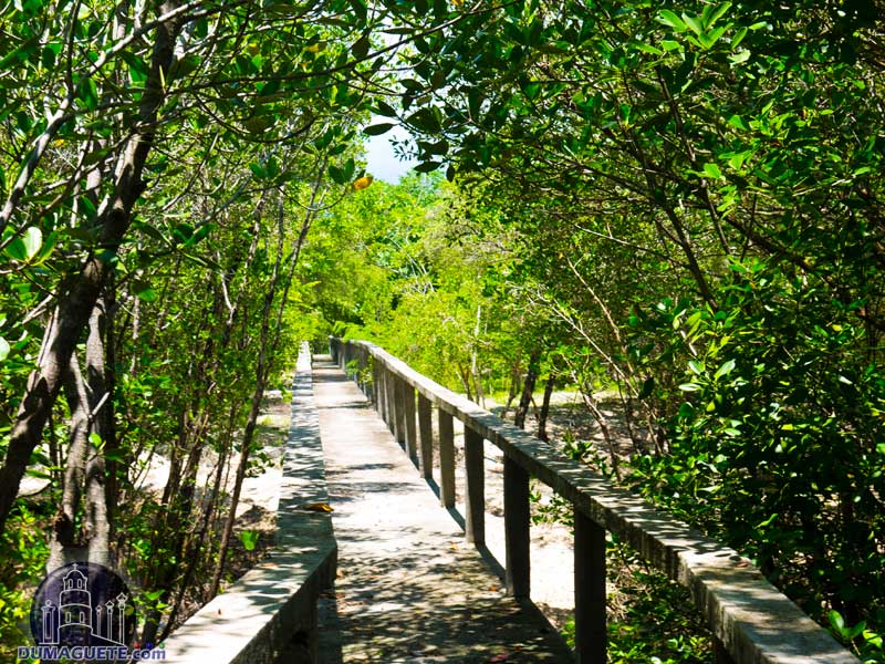 Mangrove Forrest Bais