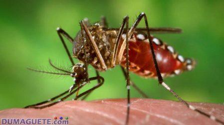 Negros Provinces Among Dengue Hot-Zones