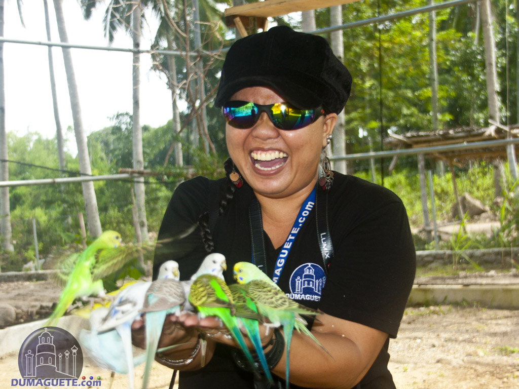 Love Bird Feeding at Amlan Zoo