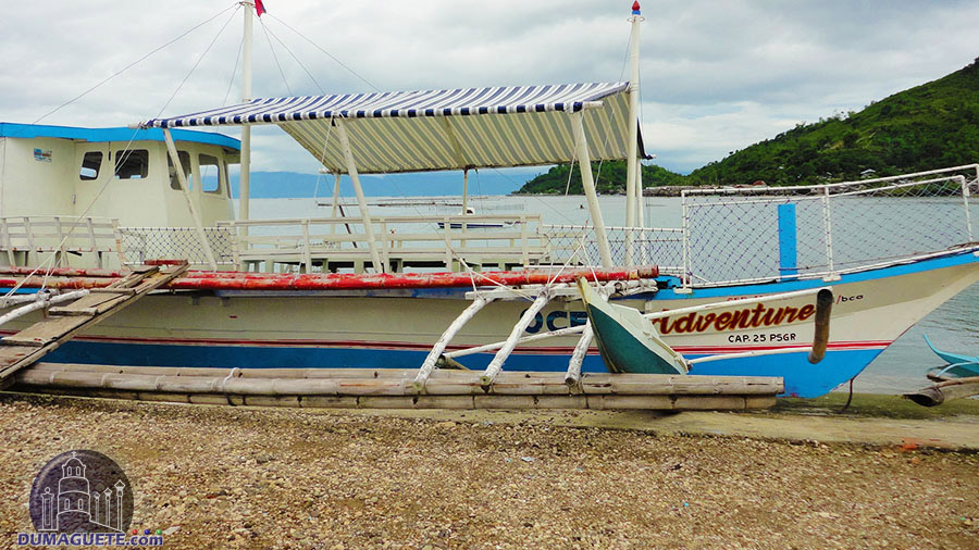 Boat rental fare- Dolphin watching in Bais