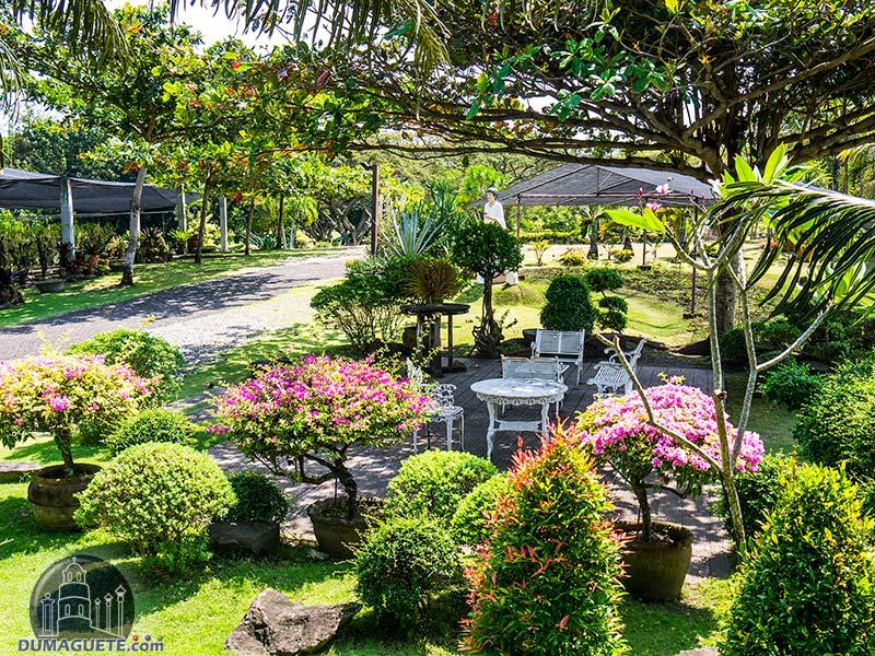 Mama Mary's Garden - Sibulan - Negros Oriental - garden