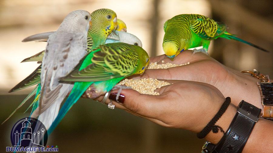 Bird Feding in Negros Oriental - Amlan