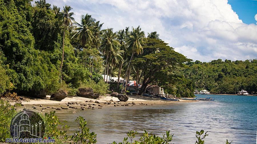 Siaton - Negros Oriental - Turtle Island - Shore