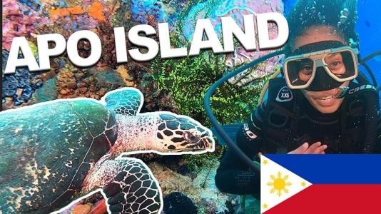 Scuba Diving in Apo Island (TURTLE ISLAND) – Video