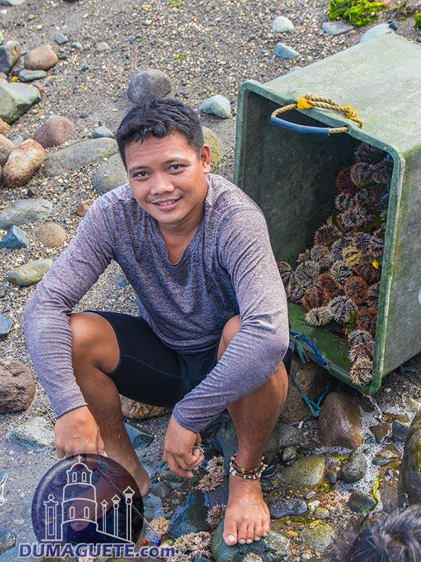 Local Fisherman - Sea Urchin