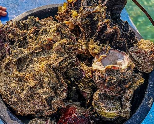 Manjuyod White Sandbar - Fresh Oyster