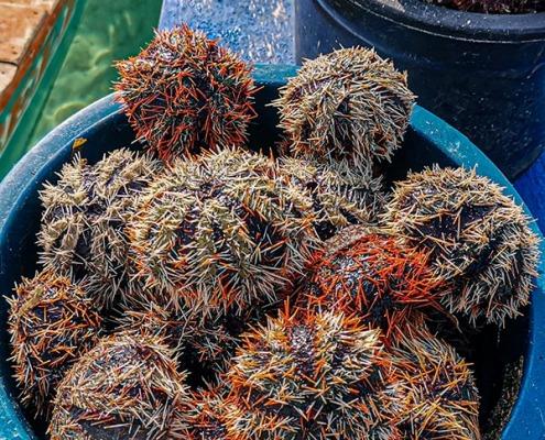 Manjuyod White Sandbar - Sea Urchin