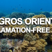 Negros Oriental Ban Reclamation Projects in Marine Protected Areas (Reclamation-Free Zone)